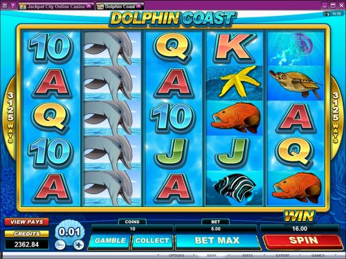 dolphin coast video slot