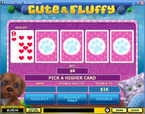 cute fluffy cat game